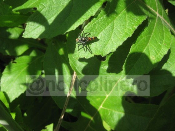 Visita Jardin Ecologico_36